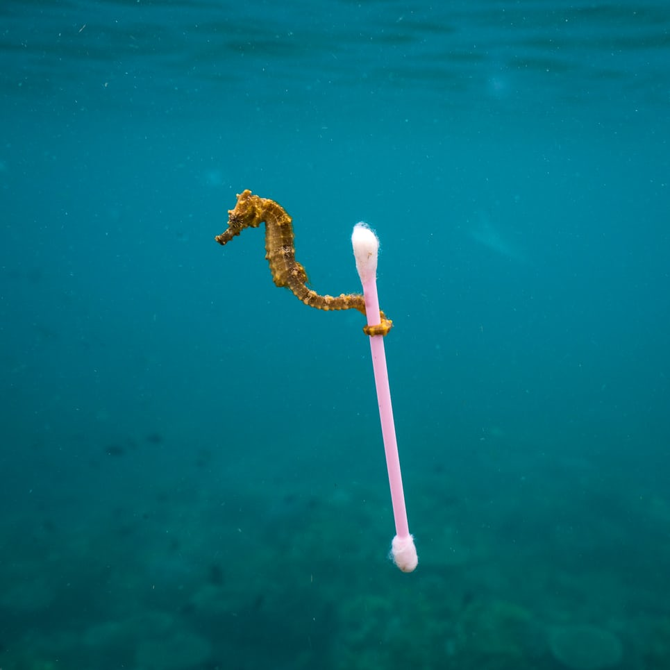 Cotton buds wildlife photographer of year